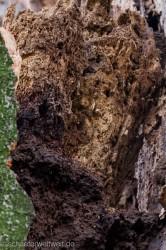 Mulmhöhle mit Gängen von Larven
