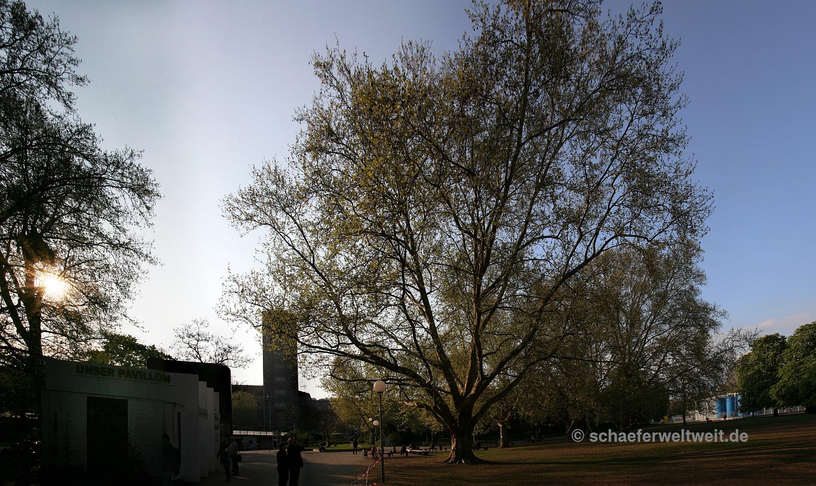 """""""Milleniums-Baum"""" von """"Gerald vom Baum"""""""